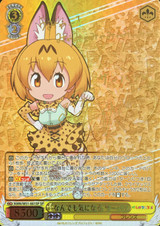 Serval, Curious About Everything KMN/W51-001SP SP