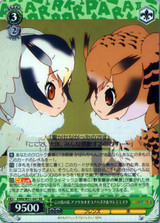 Northern White-faced Owl & Eurasian Eagle Owl, Chiefs of the Island KMN/W51-041 RR