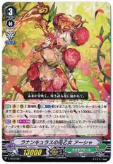 Ranunculus Flower Maiden, Ahsha V-TD12/001 TD