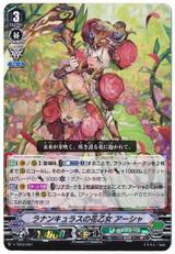 Ranunculus Flower Maiden, Ahsha V-TD12/001 RRR