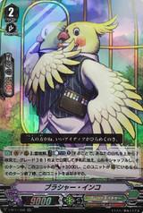 Blusher Parakeet V-BT11/026 RR