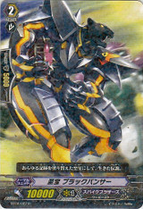 Treasured, Black Panther R BT02/022
