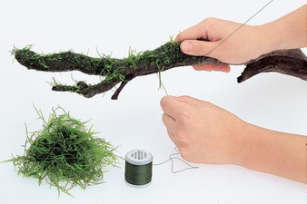 this is an example of how you can use ADA Moss Cotton for your plant to hardscape needs!