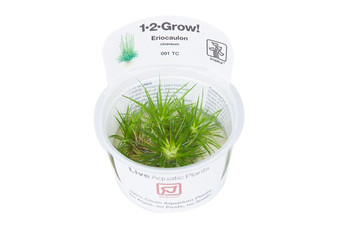 Tropica Eriocaulon Cinereum 1-2-Grow! Tissue Culture