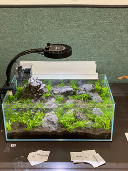 Wolf Stone used in this aquascape we put together
