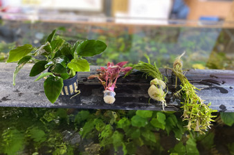 Curated Aquatic Plants - Mystery Bundle of 4