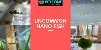 Uncommon Nano Fish Restocked!