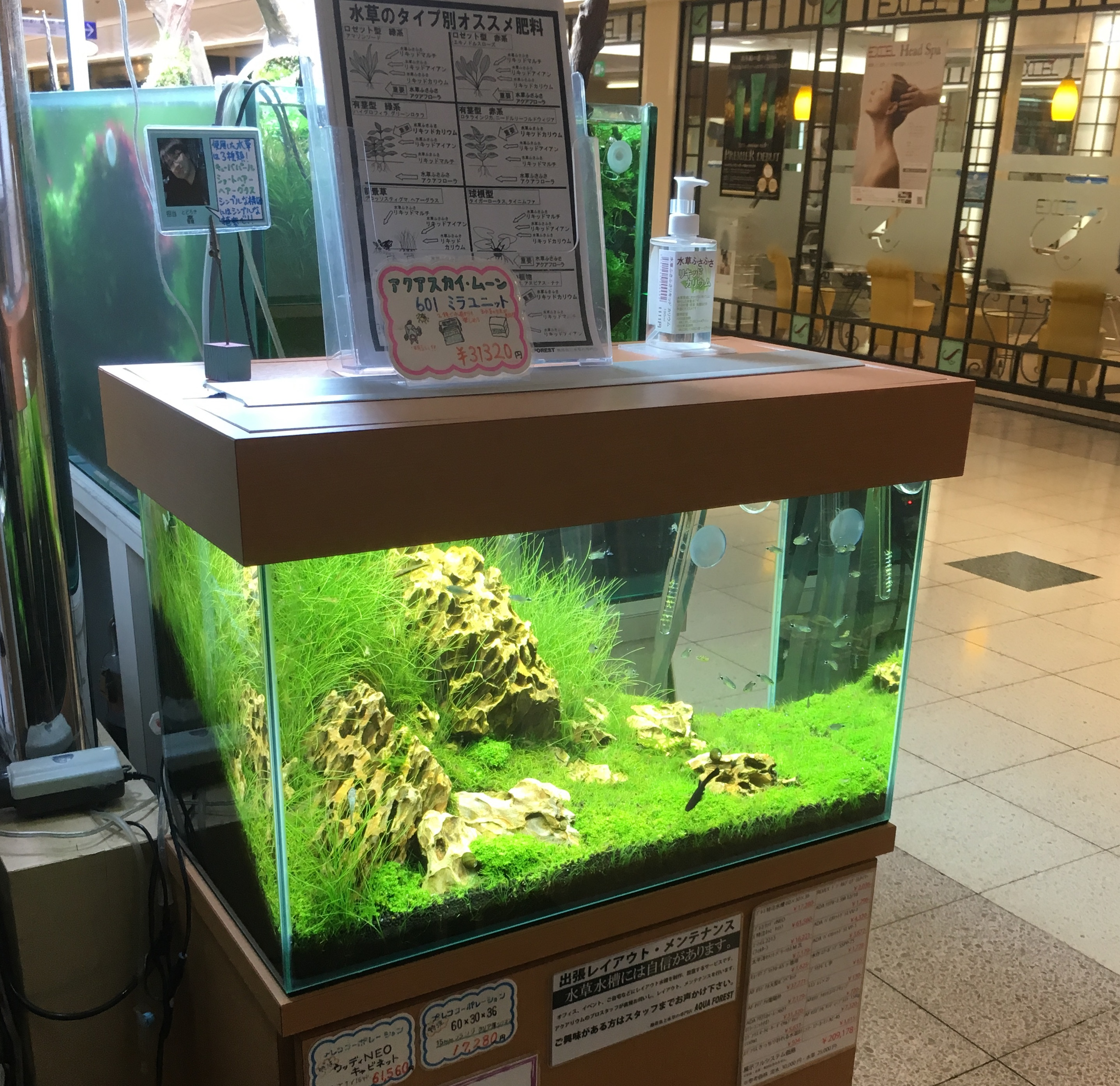 Visited Aquascape Local Fish Stores in Asia! - Pet Zone ...