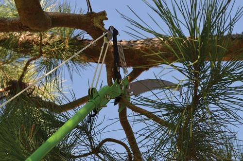 Extendable Pole Saw
