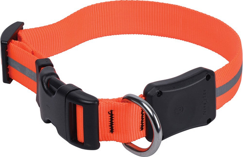 Nite Dawg LED Collar Medium