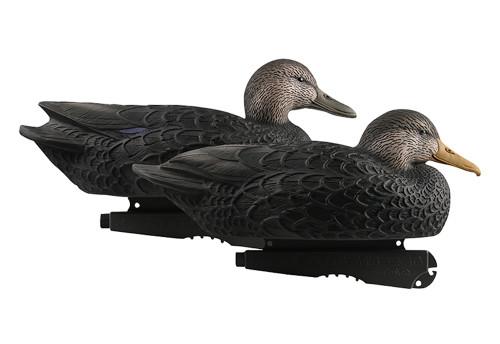 Oversize Black Ducks 6Pk