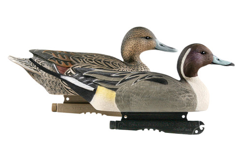 Life Size Pintails 6Pk