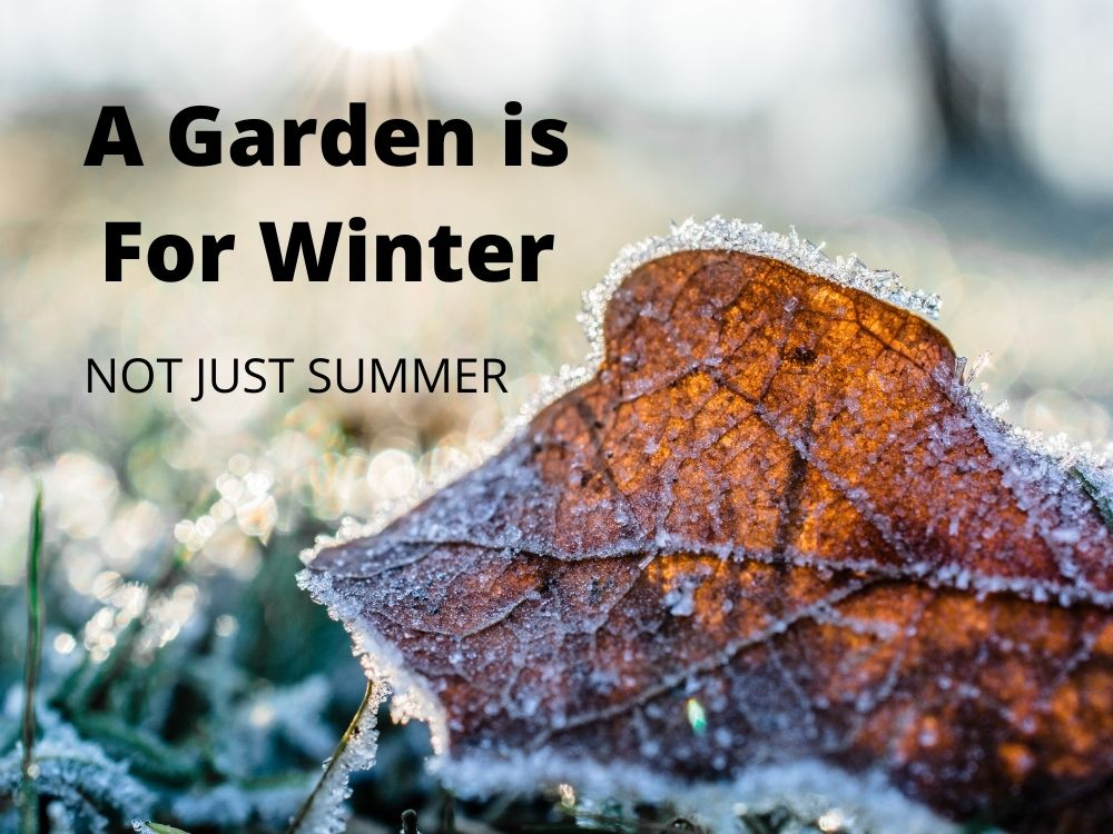11 tips for looking after your garden in winter