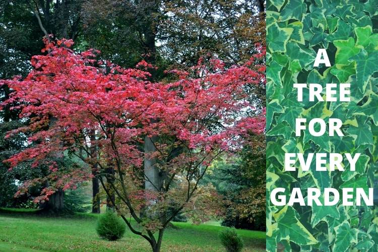 Ornamental garden trees - why gardeners love them