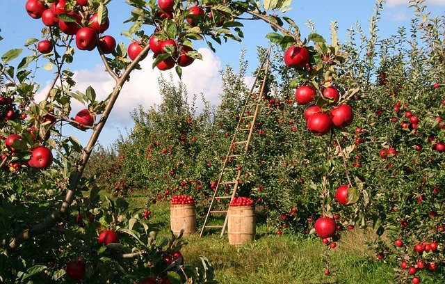 How to plant and grow fruit trees