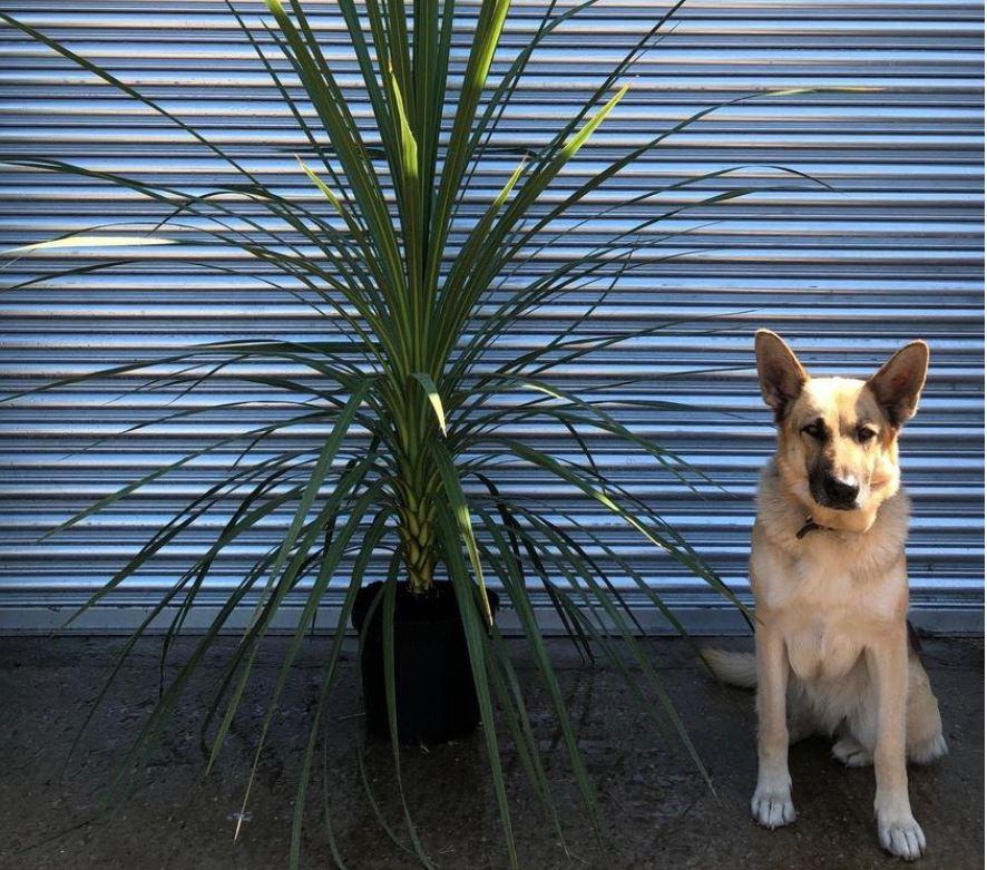 UK hardy tropical plants