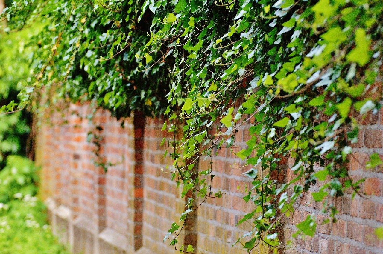 Fastest Growing Climbing Plants