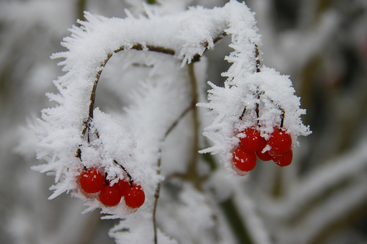 How to look after fruit trees in winter
