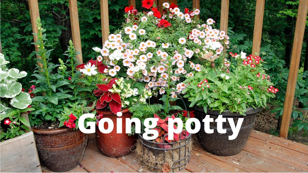 Successful container gardening – Ask the Expert