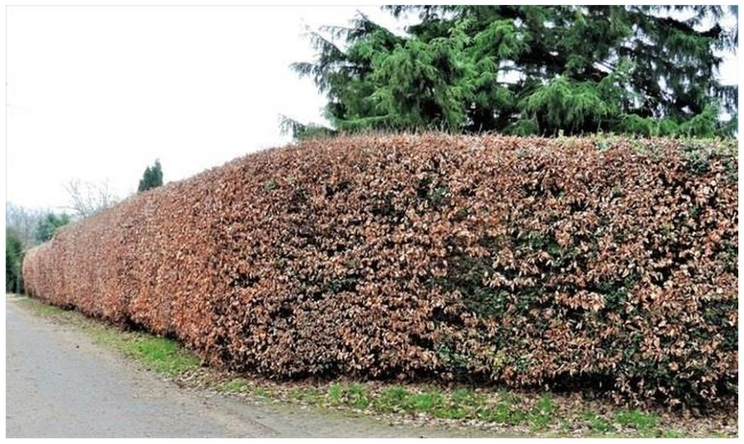 Hedging your bets for autumn