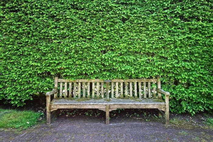What are the fastest growing hedges?