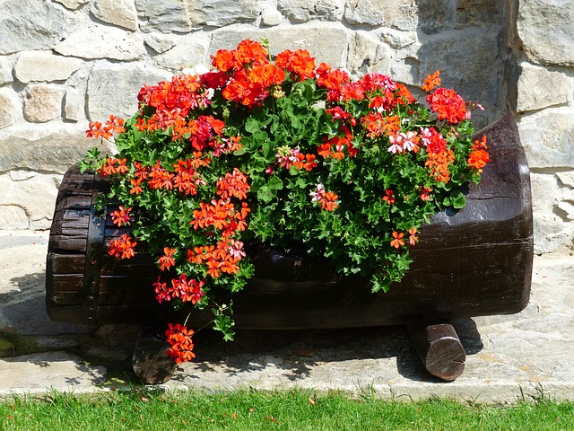 Plant container gardening