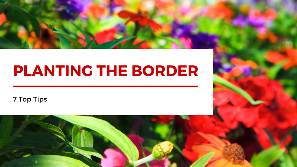 How to plant a border - top 7 tips
