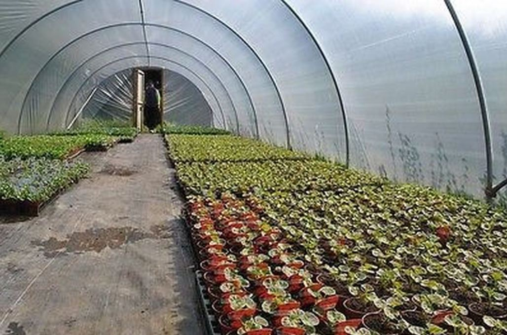 What is a polytunnel?