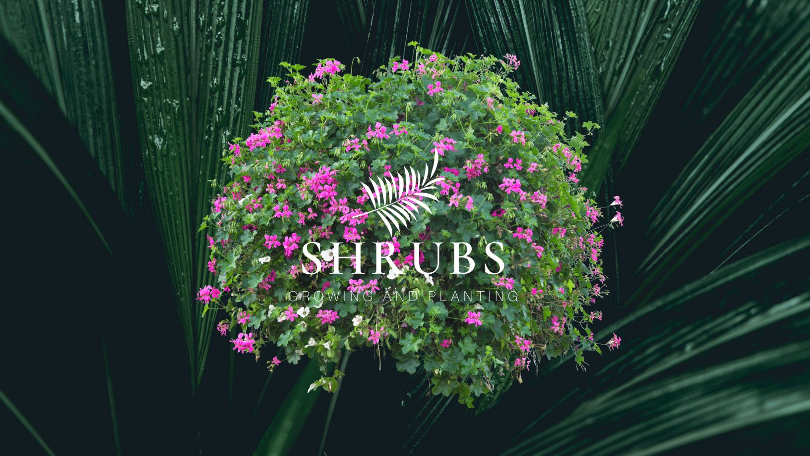 Getting the most from your garden shrubs - top tips