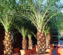 Palms & Tropical