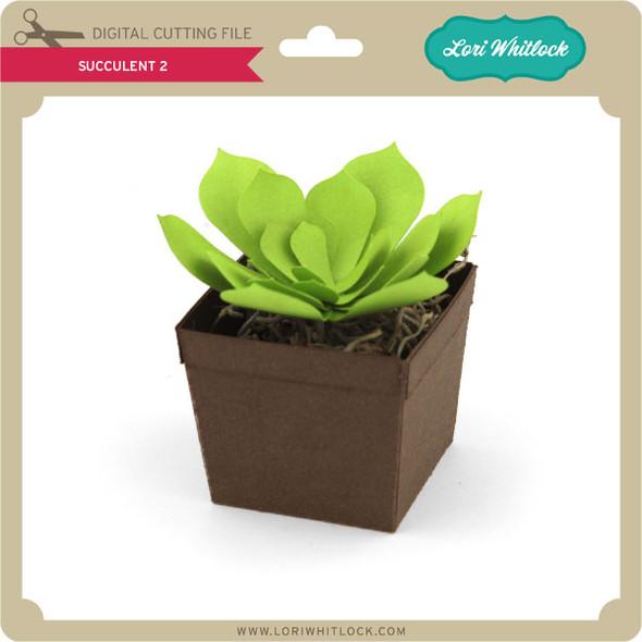 Succulent 2