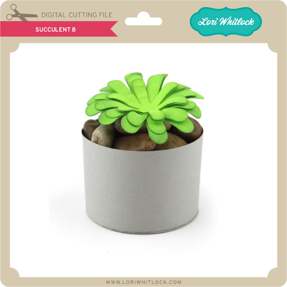 Succulent 8