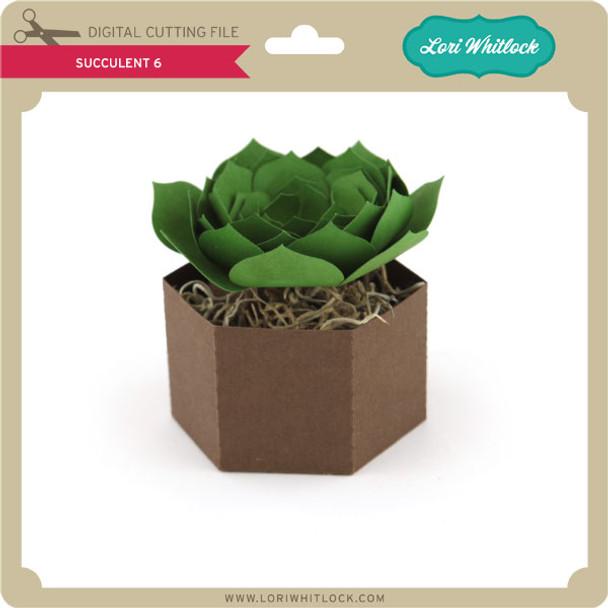 Succulent 6