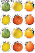 Citrus Fruit Stickers