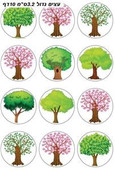 Large Shkedia Tree Stickers