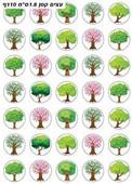 Small Shkedia Tree Stickers