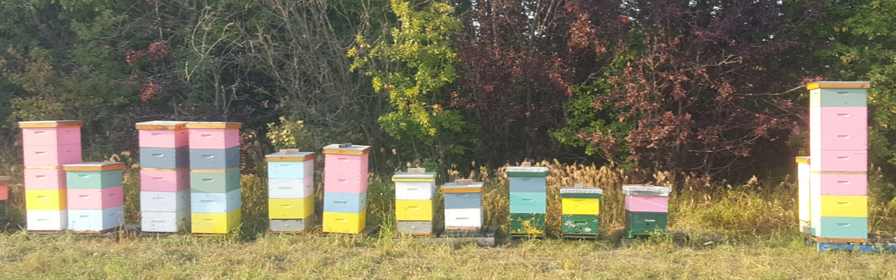 Our Apiary