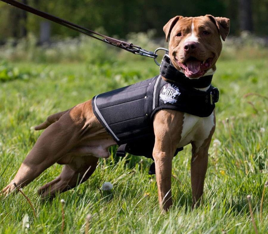 Canine Weight Vest - Black