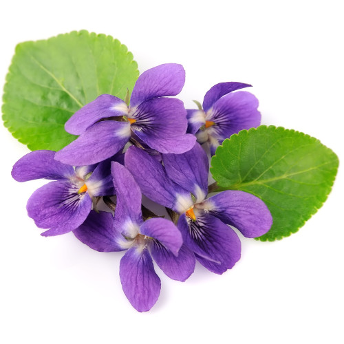 Violet Lime fragrance oil for soap and candle making from New York Scent