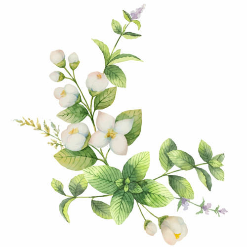 White Jasmine & Mint fragrance oil for soap and candle making from New York Scent. A Jo Malone duplication.