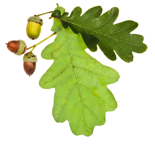 Oak (BBW type) fragrance oil for soap and candle making from New York Scent