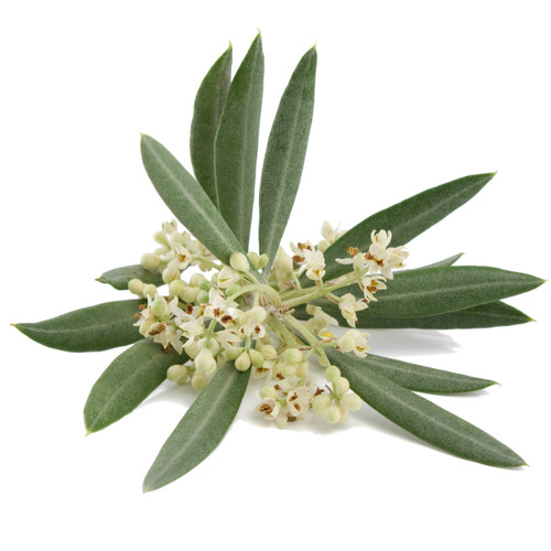 Verveine Olive Blossom fragrance oil for soap and candle making from New York Scent