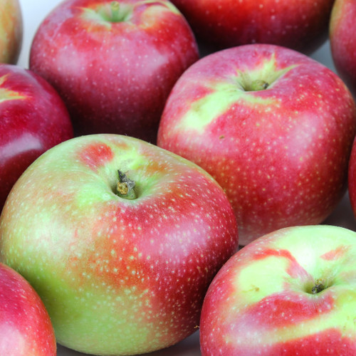 Macintosh Apple fragrance oil for soap and candle making from New York Scent