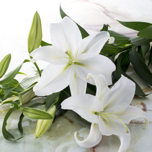 Casablanca Lily fragrance oil for making soap, lotion, wax melts, candles and more from New York Scent
