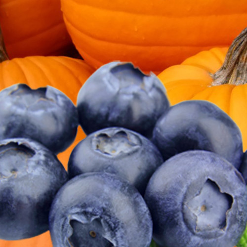 Blueberry Pumpkin Patch (BBW type) fragrance oil for soap and candle making from New York Scent
