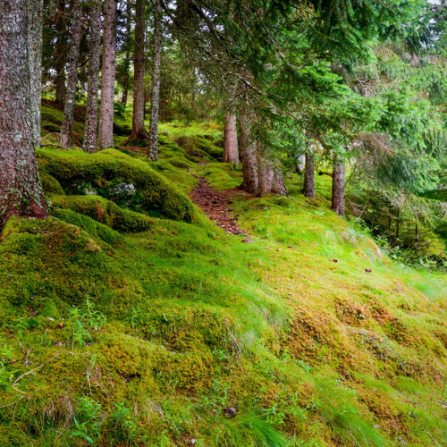 Frosted Juniper & Moss fragrance oil for soap and candle making from New York Scent