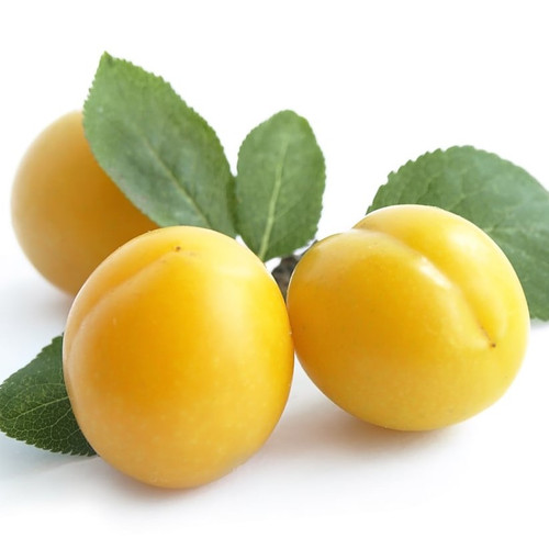 Mirabelle Plum fragrance oil for soap and candle making from New York Scent