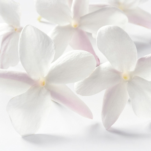 White Musk (JovanType) fragrance oil for soap and candle making from New York Scent
