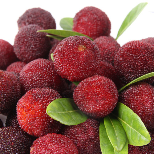 Bayberry Fragrance Oil for Soap and Candle Making from New York Scent