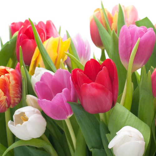 Wild Berry Tulips (BBW Type) Fragrance Oil for Candle and Soap Manufacturing from New York Scent